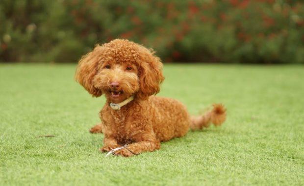 groomed dog representing PetSmart pet grooming