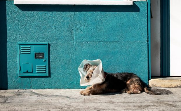 dog in cone on sidewalk