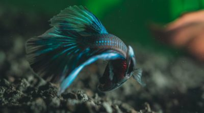 fish as small pets that are easy to take care of