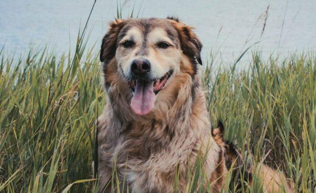pet care insurance
