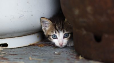 kitten hiding in between objects