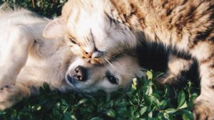 dog and cat laying in grass together